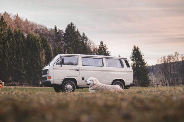 transportar-mascotas-furgoneta-alquiler